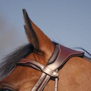 Antarès Precision huvudlag detalj häst