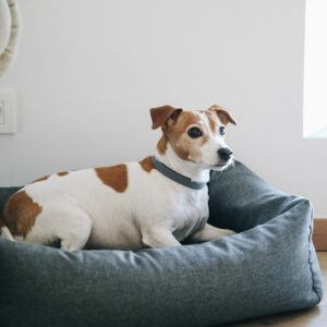 Kentucky dogwear hundbädd soft sleep jack russel