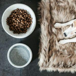 Kentucky dogwear hundskål granit