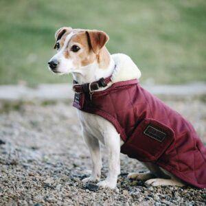 Kentucky dogwear hundtäcke original vinrött